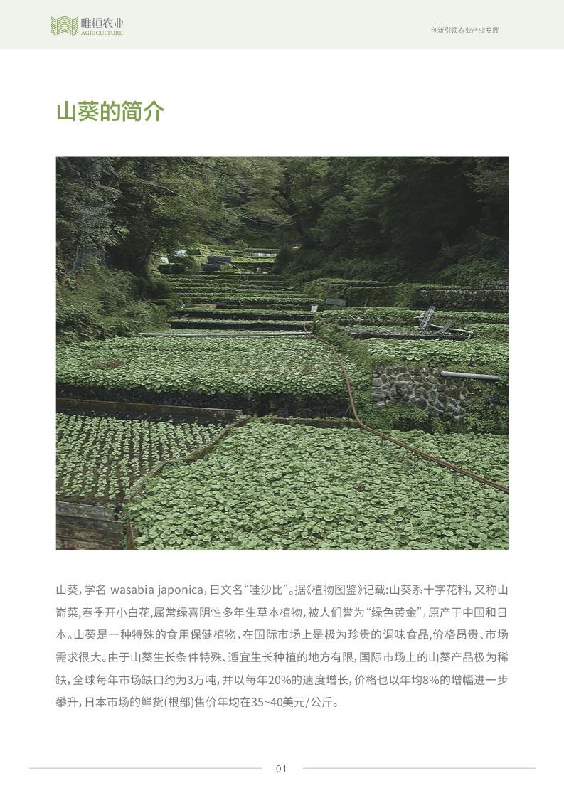 唯恒农业:山葵产业分析报告
