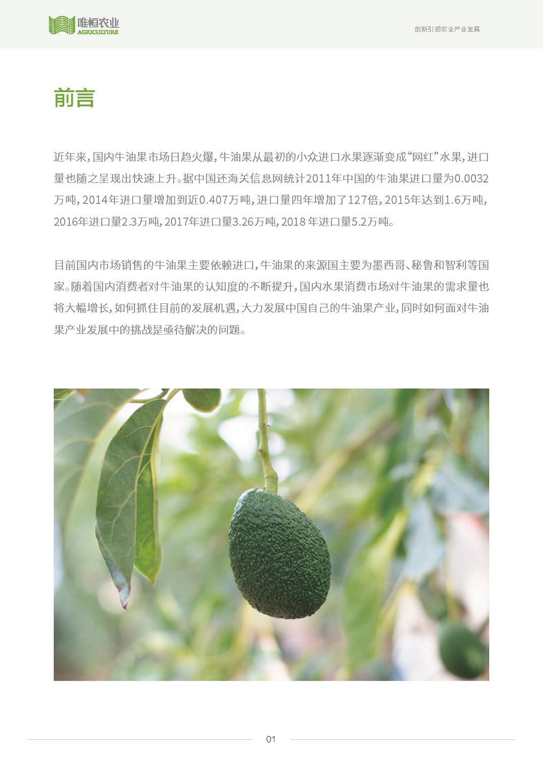 唯恒农业:2019年中国牛油果产业发展研究
