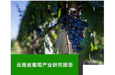 《云果:云南省葡萄产业研究报告》