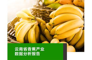 《云果:云南香蕉产业数据分析报告》