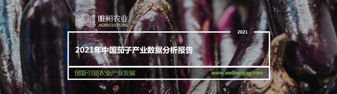 2021年中国茄子产业数据分析报告