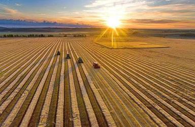中国粮食安全形势向好:产能提升库存高位