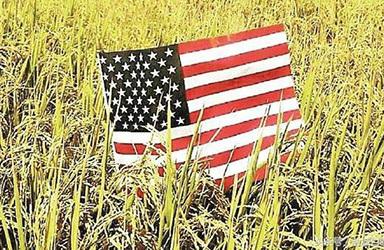 2021/22年度美国大米产量预计为610万吨